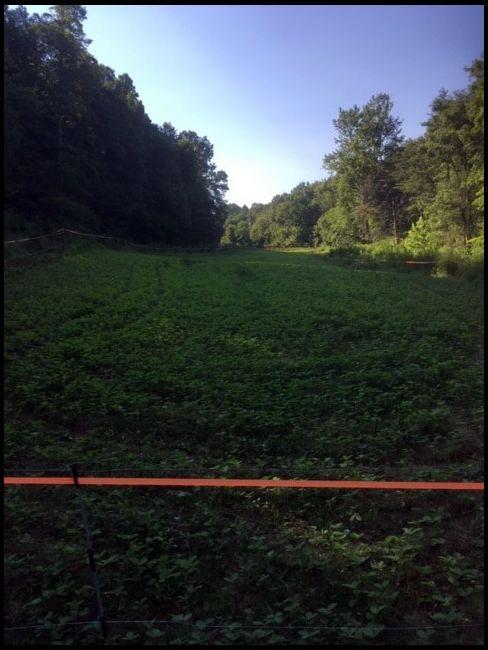Shmiller's DeerBuilder embedded Photo