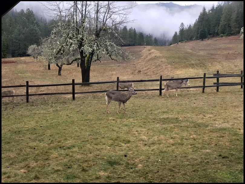 BullBuster's DeerBuilder embedded Photo