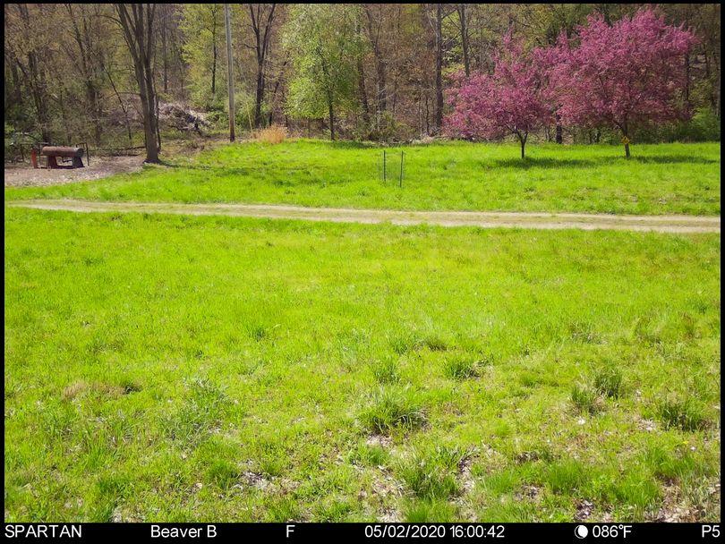 Stressless's DeerBuilder embedded Photo