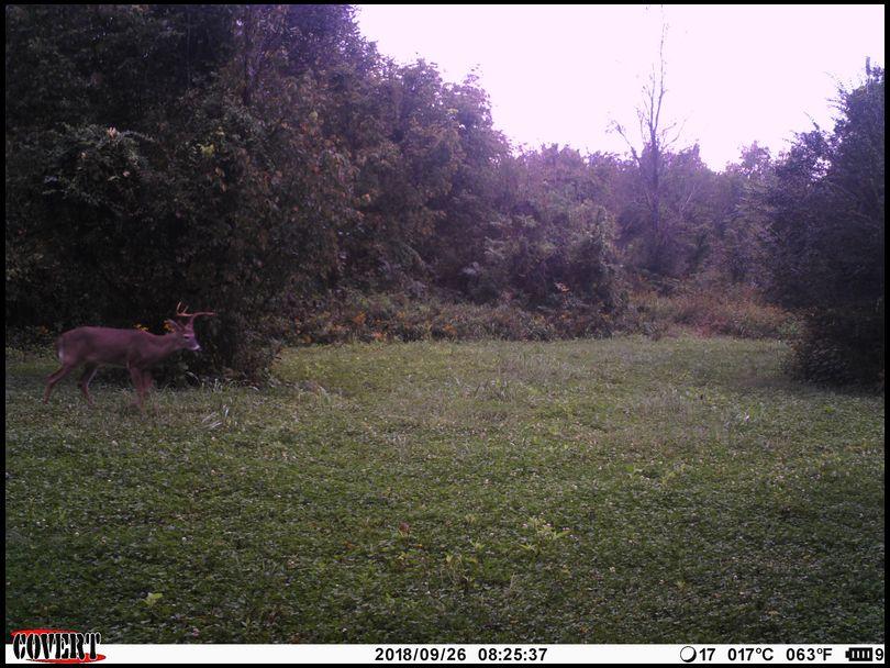 Puppy's DeerBuilder embedded Photo