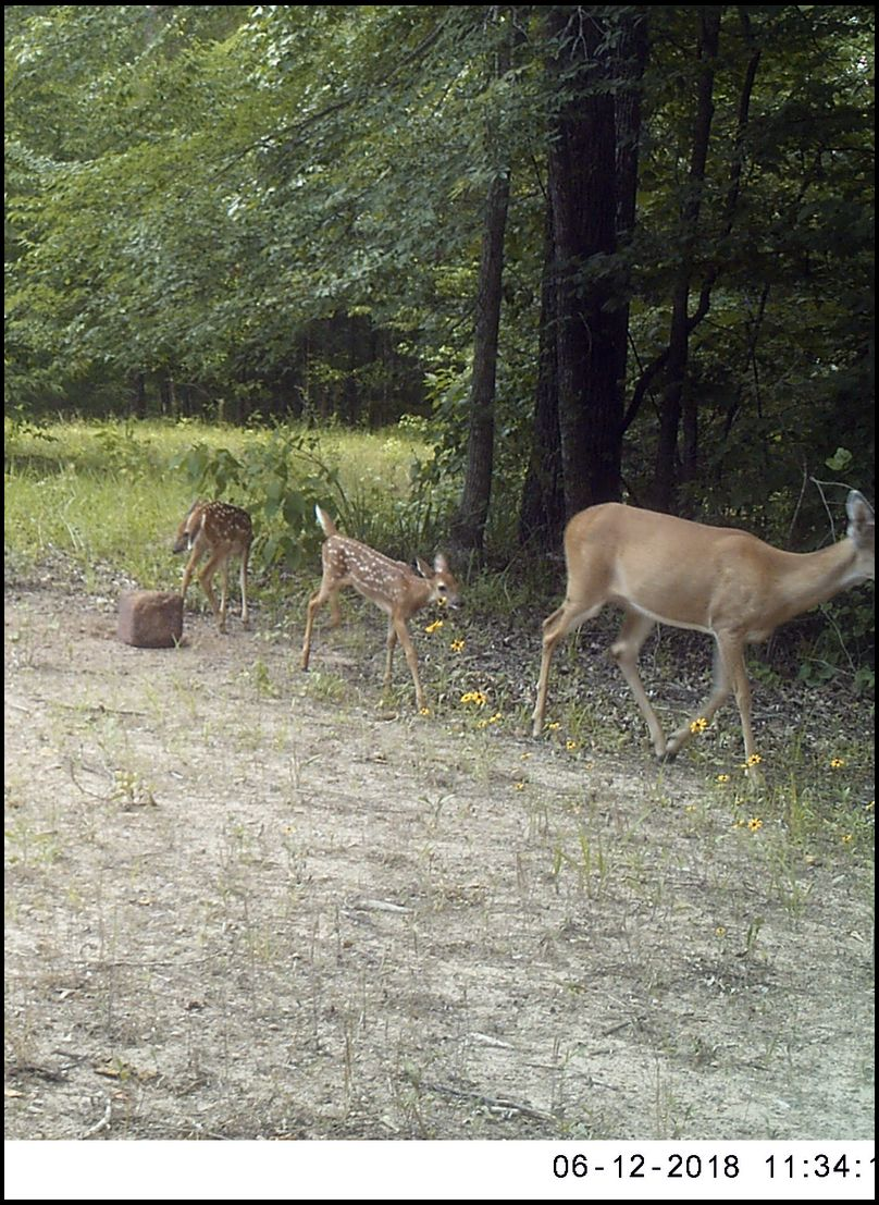 drycreek's DeerBuilder embedded Photo