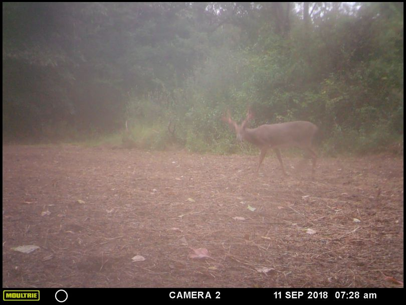mattandersen's DeerBuilder embedded Photo