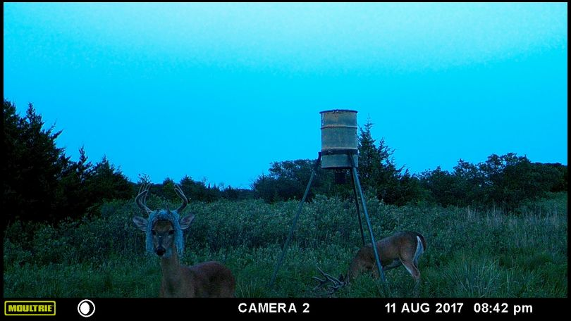 boman's DeerBuilder embedded Photo