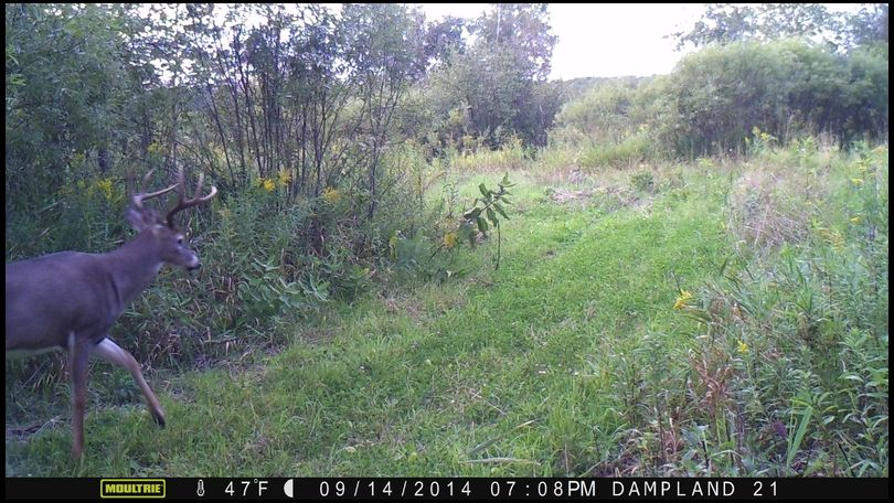 Nocturnal Deer Area Activity Question