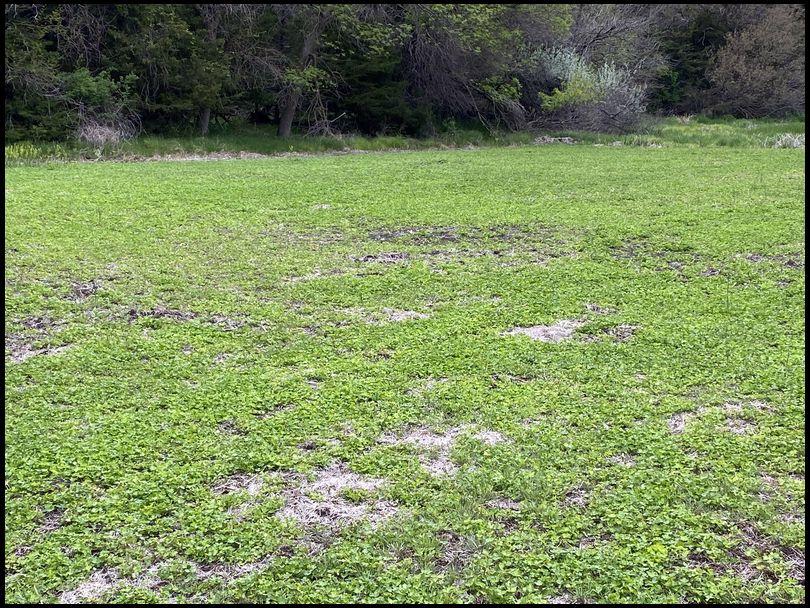 Osceola's DeerBuilder embedded Photo