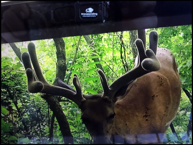 ScottG 's DeerBuilder embedded Photo