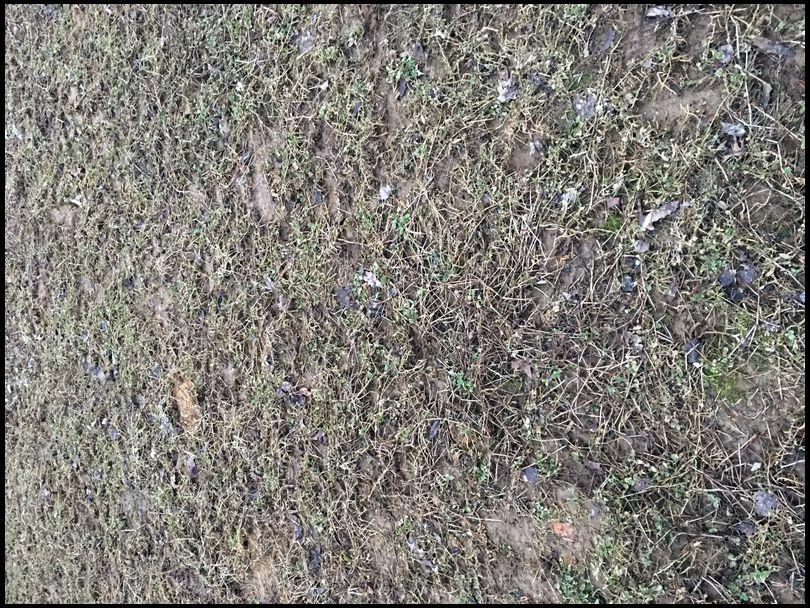 MilkweedManiac's DeerBuilder embedded Photo