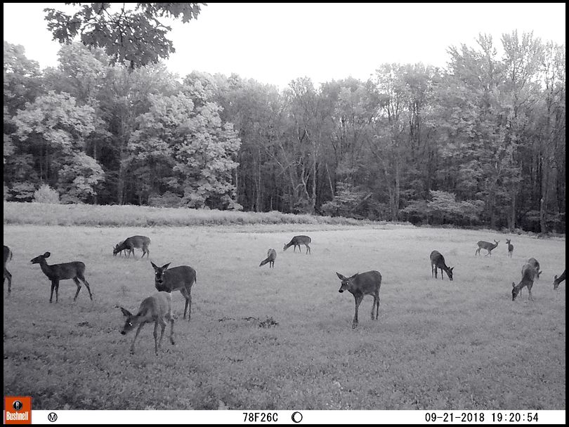 Stym23's DeerBuilder embedded Photo