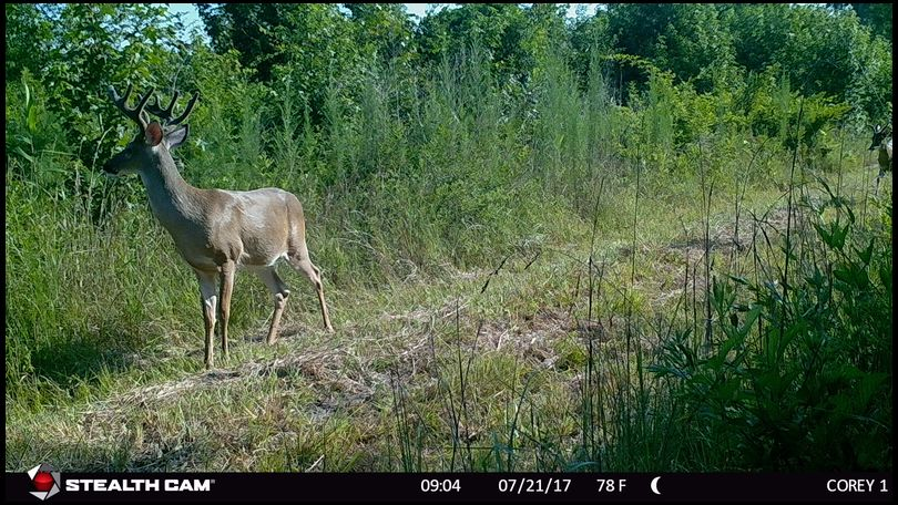 Carolina_Hunter's DeerBuilder embedded Photo