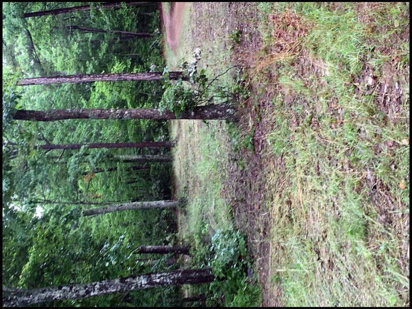Creek chub's MOBILE embedded Photo