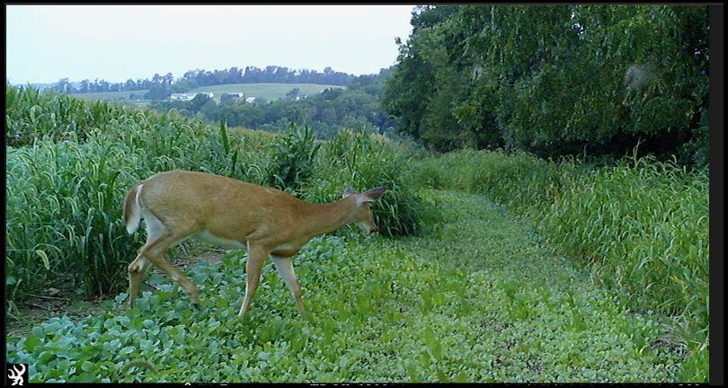 Plant Stuff's DeerBuilder embedded Photo