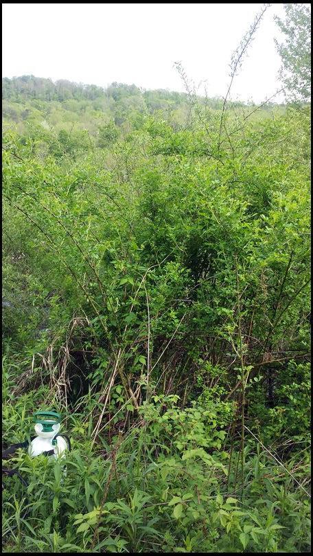 Teeton's DeerBuilder embedded Photo