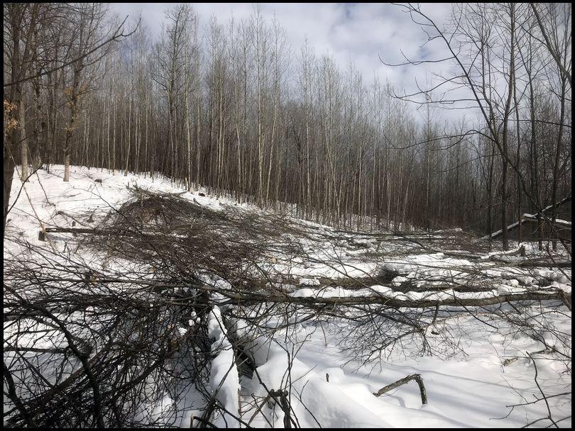Vino&Venison's DeerBuilder embedded Photo