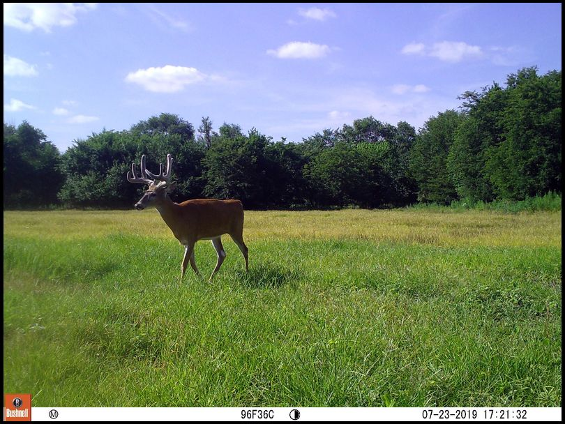 Osceola's DeerBuilder embedded Photo