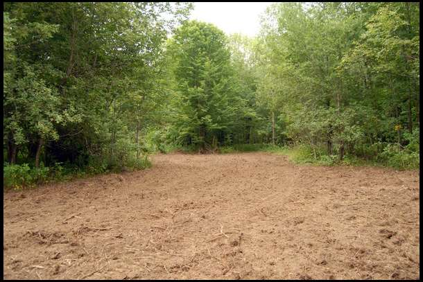 Deep Woods Food Plot 4 Oats Property Update By